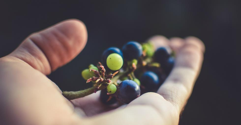 Organic or not How much organic food should your grocery store stock