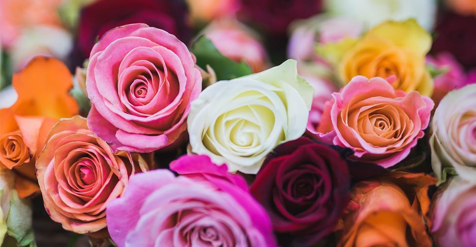 sector-spotlight-florist-south-africa