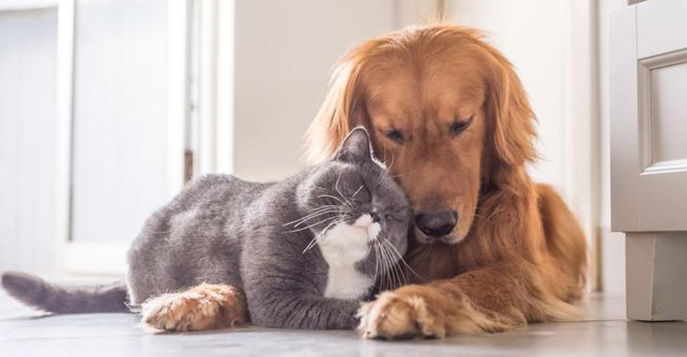 catanddog(finalised1)