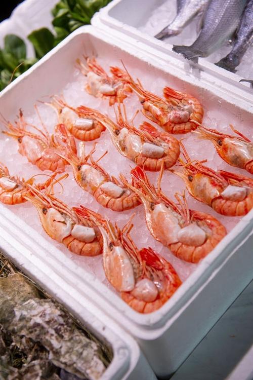north queensland's finest seafood - 4