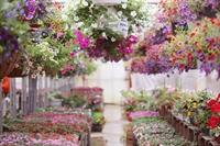 long established nursery garden - 1
