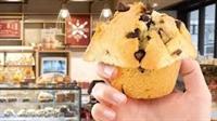 muffin break sydney north - 1