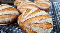 long established bakery frankston - 2