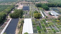 tropical plant nursery - 1