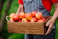 low rent fruit vegetable - 1