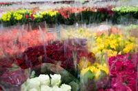 florist easy operation no - 2