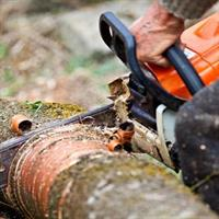 professional tree services business - 3