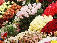 florist easy operation no - 3