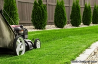 belgrave gardening - 1