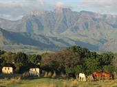 Guest Farm In Drakensberg With Spectacular Views For Sale